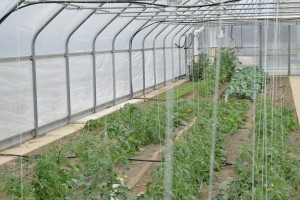 5. Crops in the solar tunnel get 12 months of a growing season and require little to no external heat
