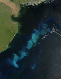 Photo of algal blooms from wikipedia.com