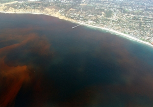 Photo of red tide off the coast of San Diego California from wikipedia.com
